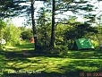Treed Tenting sites